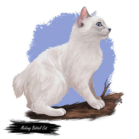 Mekong Bobtail Cat domesticated cat breed isolated on white background. Digital art illustration of hand drawn kitty for web. Kitten breed of domestic pet. Russian Longhair Cat with cut tail