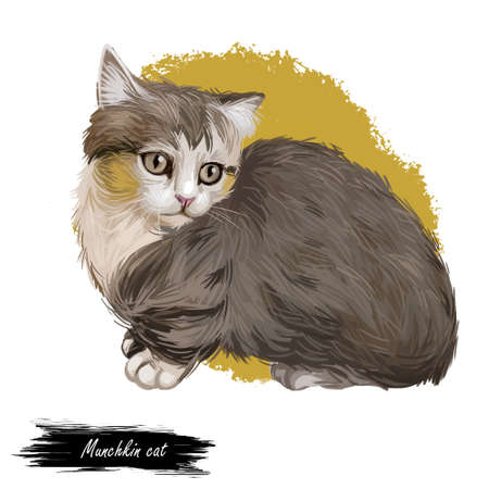 Munchkin cat or Sausage cat breed characterized by short legs. Adolescent munchkin kitten domesticated isolated on white. Digital art illustration of hand drawn kitty for web, breed of domestic pet. Zdjęcie Seryjne