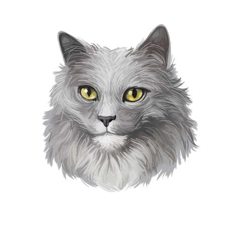 Nebelung cat longhaired Russian Blue breed isolated on white background. Digital art illustration of hand drawn kitty for web. Kitten breed of domestic pet, t-shit print, grey fluffy pussycat