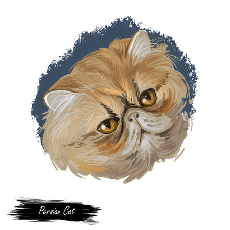Persian Cat long-haired breed isolated feline animal portrait. Digital art kitten with round face and short muzzle, hand drawn cute kitty. Domestic pussy cat print for web, cover, pet shop emblem Zdjęcie Seryjne