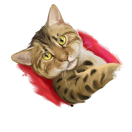 Ocicat domestic cat resemble to wild cat. Siamese and Abyssinian, American Shorthair. Digital art illustration of hand drawn kitty for web. Kitten breed of domestic pet. Chocolate spotted ocicat