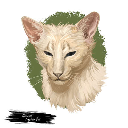 Oriental Longhair Foreign Longhair or Mandarin cat. British Angora or Turkish Angora breed isolated on white background. Digital art illustration of hand drawn kitty for web. Kitten of domestic pet. Zdjęcie Seryjne