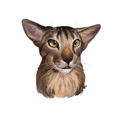 Oriental Shorthair Cat portrait isolated on white. Digital art illustration of home pet portrait, pussy kitten t-shirt print, vet clinic label. Siamese domestic cat breed funny adorable feline for web