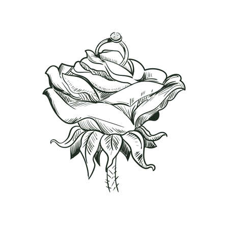 Rose with wedding ring isolated sketch. St. Valentines day holiday greeting card with flower and engagement ring with diamond. Vector illustration on February 14, gift or present on romantic party Ilustração