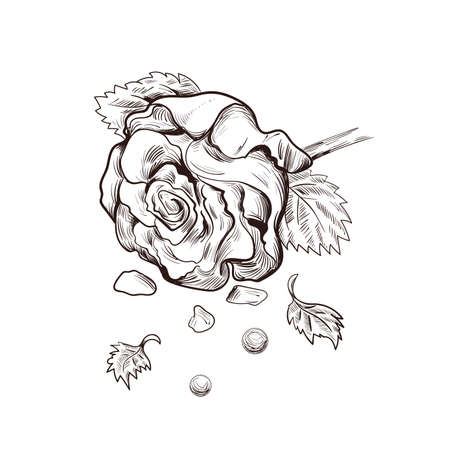Rose flower and pearls isolated vector sketch. Illustration of postcard on February 14, gift or present on romantic party, blooming bud of luxury flower present on Valentines day party, hand drawn