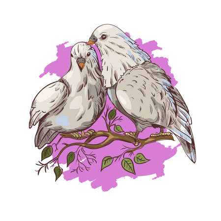 February 14, pigeon birds symbol of love isolated couple on branch. St. Valentines day holiday greeting card with doves sitting on tree with leaves. Vector illustration of postcard with loving birds.