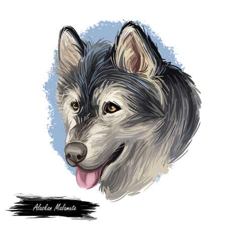 Alaskan Malamute digital art illustration of cute canine animal of grey color. Sled dog, similar to other arctic, husky, spitz breeds Greenland Dog, Canadian Eskimo Dog, Siberian Husky, and Samoyed. Imagens