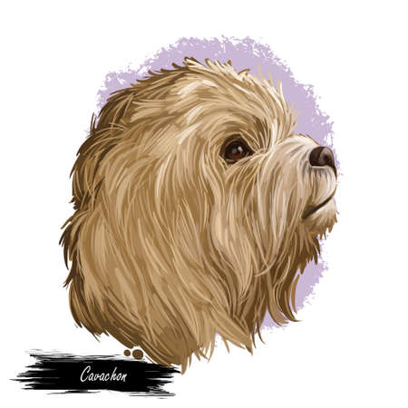 Cavachon digital art illustration of cute canine animal of beige color. Cavalier King Charles Spaniel and Bichon Frise, head portrait profile view. Muzzle of puppy, hand drawn dog crossbreed. Imagens