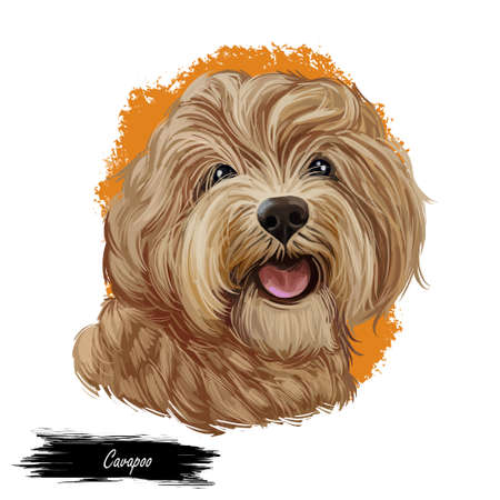 Cavapoo digital art illustration of cute canine animal of beige color. Cavoodle or crossbreed dog, offspring of Poodle and Cavalier King Charles Spaniel. Red Toy Cavoodle Puppy hand drawn portrait.