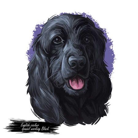 English cocker spaniel working Black breed of gun dog digital art illustration of cute canine animal. Working-dog form of Field Spaniel and English Springer Spaniel, hand drawn portrait isolated.