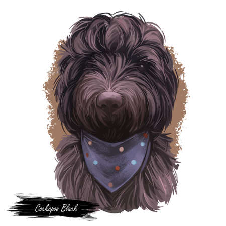 Cockapoo Black dog digital art illustration of cute canine animal. Mixed-breed dog cross between American Cocker or English Cocker Spaniel, miniature or toy poodle hand drawn portrait isolated. Imagens