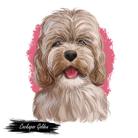 Golden Cockapoo dog digital art illustration of cute canine animal. Mixed-breed dog cross between American Cocker or English Cocker Spaniel, miniature or toy poodle hand drawn portrait isolated. Imagens