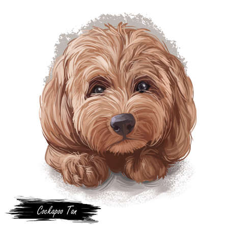 Tan Cockapoo dog digital art illustration of cute canine animal. Mixed-breed dog cross between American Cocker or English Cocker Spaniel, miniature or toy poodle hand drawn portrait isolated.