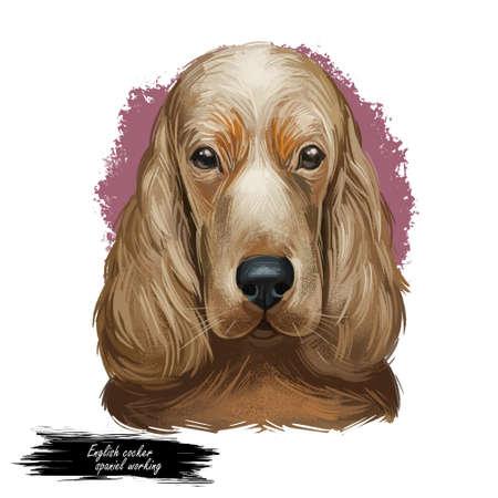 Tan English cocker spaniel working breed of gun dog digital art illustration of cute canine animal. Working-dog form of Field Spaniel and English Springer Spaniel, hand drawn portrait isolated.