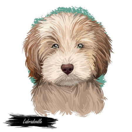 Labradoodle dog digital art illustration of cute canine animal. Crossbreed dog created by crossing Labrador retriever and Standard, Miniature, or Toy poodle hand drawn portrait, puppy muzzle