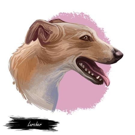 Lurcher dog, offspring of sighthound mated with pastoral breed or terrier, digital art illustration of cute canine animal. Brown Lurcher head portrait, isoated hand drawn puppy muzzle with tongue. Imagens