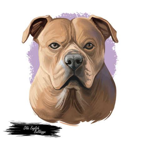 Olde English Bulldogge digital art illustration of cute dog muzzle isolated on white. Leavitt Bulldog hand drawn portrait, muscular, medium-sized dog of great strength, puppy favourite pet