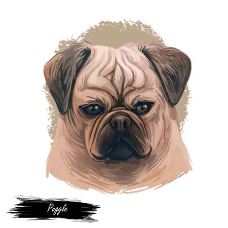 Puggle digital art illustration of cute dog muzzle isolated on white. Crossbreed dog between Beagle and Pug, hand drawn cute pet portrait, canine animal, pedigree puggle dog breed, puppy head