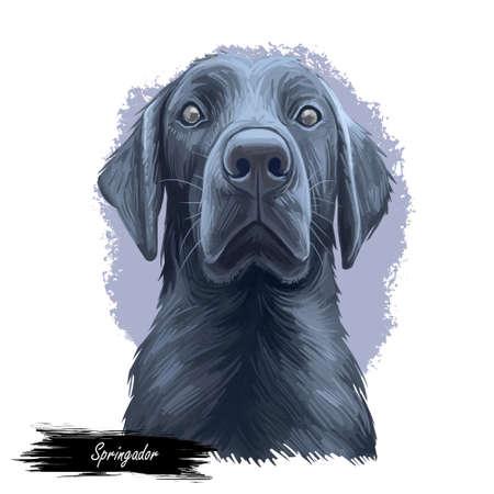 Springador digital art illustration of cute dog muzzle isolated on white. Cross breed dog of springer spaniel and labrador retriever, black canine animal portrait, dark hairy puppy, pedigreed dogo Imagens