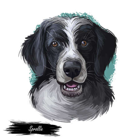 Sprollie digital art illustration of cute dog muzzle isolated on white. English Springer Spaniel and Border Collie, the Sprollie. Black canine animal portrait, dark hairy puppy, pedigreed dogo 写真素材