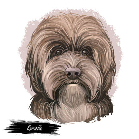 Sproodle digital art illustration of cute dog muzzle isolated on white. Crossbreed of Poodle and English Springer Spaniel. Long haired canine animal portrait, dark hairy puppy, pedigreed dogo