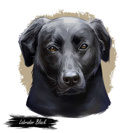 Black labrador retriever portrait of purebred digital art illustration. Canadian mammal gun dog, hunting breed. Doggy closeup drawing, puppy lab with large ears, canine hand drawn animal pedigree pet Imagens