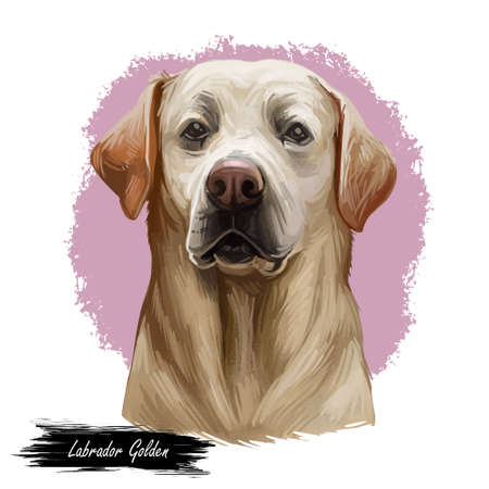 Golden labrador retriever portrait of purebred digital art illustration. Canadian mammal gun dog, hunting breed. Doggy closeup drawing, puppy lab with large ears, canine hand drawn animal pedigree pet