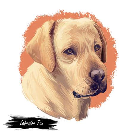 Tan labrador retriever portrait of purebred digital art illustration. Canadian mammal gun dog, hunting breed. Doggy closeup drawing, puppy lab with large ears, canine hand drawn animal pedigree pet