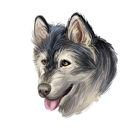 Alaskan Malamute digital art illustration of cute canine animal of grey color. Sled dog, similar to other arctic, husky, spitz breeds Greenland Dog, Canadian Eskimo Dog, Siberian Husky, and Samoyed