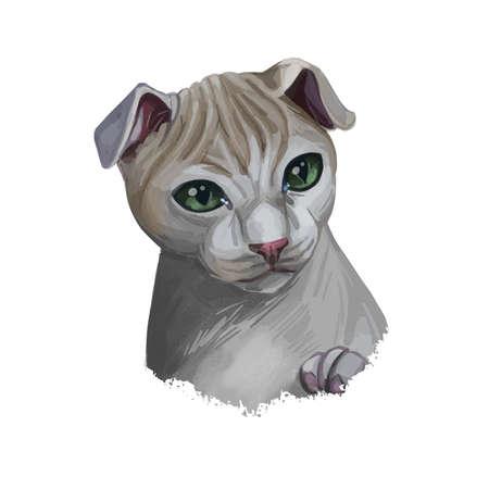 Ukrainian Levkoy kitten cat breed of distinct appearance, inward-folding ears and little to no hair. Digital art illustration pussy kitten portrait, fluffy domestic pet t-shirt print hand drawn tabby