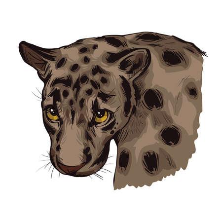 Sunda clouded leopard muzzle portrait closeup. Neofelis diardi animal from Feline mammals family. Medium-sized catlike creature with brown fur with sports. Wild big cat, vector illustration 向量圖像