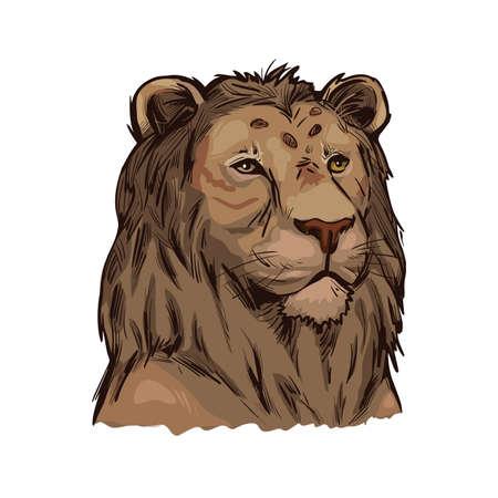 Tigon animal muzzle portrait in closeup. Animalistic drawing of tigon hybrid mammal. Wild car of feline family predator with furry coat. Felidae hunter carnivore creature vector illustration