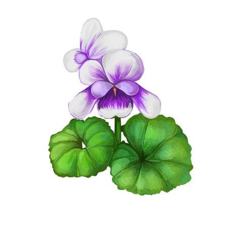 Native violets flowers isolated digita art illustration. Herbal plant Viola, flowering plants in violet family Violaceae . Viola reichenbachiana native australian plant, purple buds and green leaves 版權商用圖片