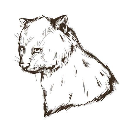 Herpailurus yagouaroundi portrait of animal. Watercolor drawing of Puma. Eyra profile mammal from Felinae family. Catlike predator, feline creature face and text. Jaguarundi vector illustration