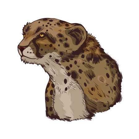 Cheetah large cat from North, Southern East Africa isolated vector illustration. Southeast African cheetah hand drawn portrait. Northeast asiatic cheetah. Hunting season, wildlife feline portrait