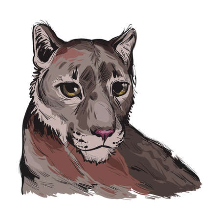 Cougar large felid native to Americas isoated wildlife cat. Digita art illustration of mountain lion, puma, red tiger, and catamount. Puma concolor North American cougar hunting savanna season wildcat 矢量图像