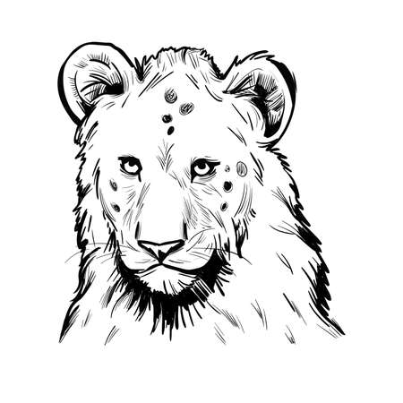 Panthera leo muzzle portrait in closeup. Mammal with black furry coat, feline animal. Predator from wild environment, drawing with text brush. Carnivore creature vector illustration.