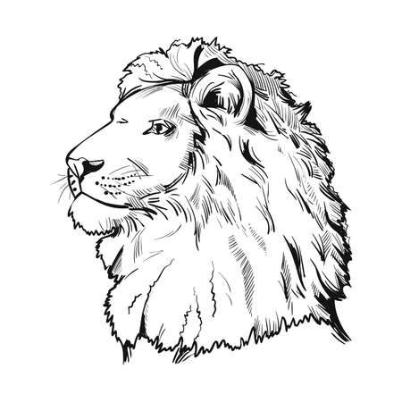 Lion animal muzzle portrait in closeup. Deep-chested cat with mane looking aside. Mammal symbol of power and royalty. Panthera leo representative member of feline family vector illustration