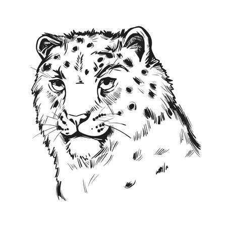 Snow leopard portrait in close up. Watercolor vector illustration of Panthera uncia. Mammal with thick fur, furry coat of cat. Uncia wild animal from Feline family. Catlike carnivore creature Illustration