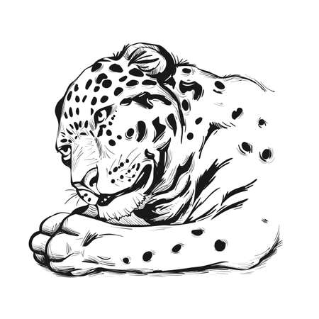 Jaguar portrait closeup of animal. Panthera once type of carnivore fauna. Wildlife of South America, drawn big mammal with furry coat. Feline cat with snout, muzzle vector illustration