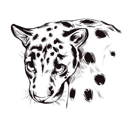 Sunda clouded leopard muzzle portrait closeup. Neofelis diardi animal from Feline mammals family. Medium-sized catlike creature with brown fur with sports. Wild big cat, vector illustration 矢量图像