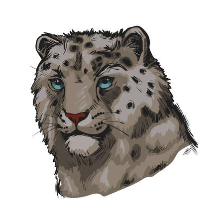 Snow leopard portrait in close up. Watercolor vector illustration of Panthera uncia. Mammal with thick fur, furry coat of cat. Uncia wild animal from Feline family. Catlike carnivore creature 向量圖像