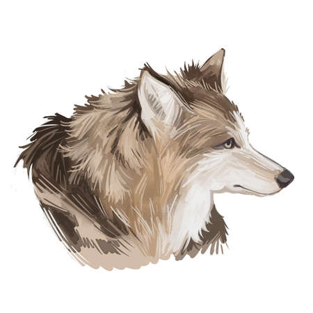 Hare Indian dog extinct domesticated canine breed of domestic dog, coydog, or domesticated coyote. Canada or American dog hand drawn portrait, digital art illustration isolated animal head