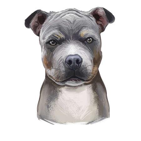 American Staffordshire Terrier Puppy isolated hand drawn digital art illustration. Amstaff medium-sized, short-coated American dog breed hand drawn portrait. Grey American Pit Bull Terrier