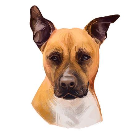 American Staffordshire Terrier dog isolated hand drawn digital art illustration. Amstaff medium-sized, short-coated American dog breed, hand drawn puppy portrait. Brown American Pit Bull Terrier