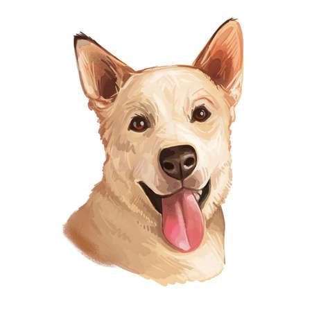 Carolina dog isolated digital art illustration hand drawn portrait. Yellow dog yaller dog, American Dingo or Dixie Dingo, breed of medium-sized, feral puppy. American standardized breed dog head