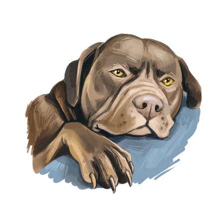 Catahoula Bulldog dog isolated hand drawn portrait. Digital art illustration of Catahoula Leopard Dog or Catahoula Cur, American dog breed. Louisiana Catahoula Leopard Dog usa popular pet
