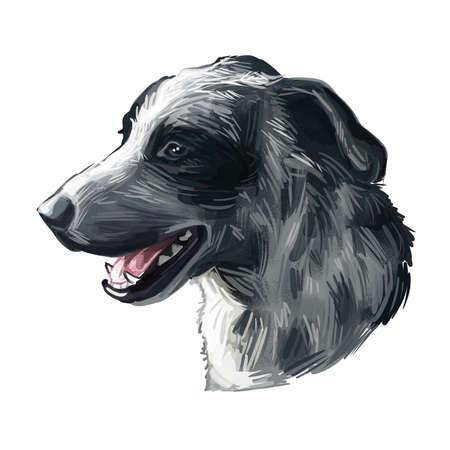 Catahoula Cur dog isolated hand drawn portrait. Digital art illustration of Catahoula or Catahoula Cur, American dog breed. Louisiana Catahoula Dog USA popular pet profile view muzzle 版權商用圖片