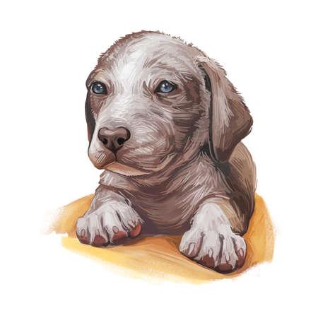 Catahoula Cur puppy isolated hand drawn portrait. Digital art illustration of Catahoula or Catahoula Cur, American dog breed. Louisiana Catahoula Dog USA popular pet profile view muzzle 版權商用圖片