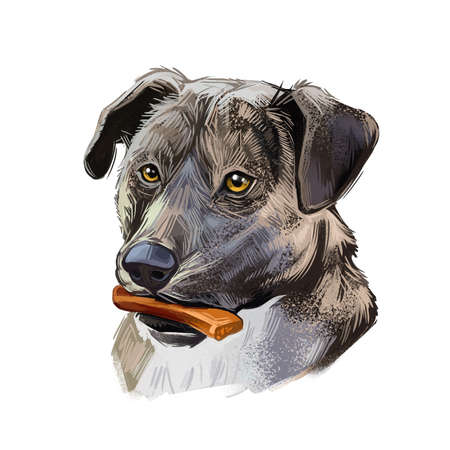 Mountain Cur Dog isolated digital art illustration. Hand drawn dog muzzle portrait, puppy with bone in mouth, working dog bred for treeing, trailing game. Dog breeds originating from United States 版權商用圖片
